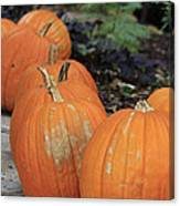 Pumpkins Galore V2 Canvas Print