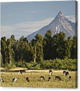 Puntiagudo Volcano In The Background Canvas Print