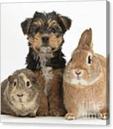 Pup, Guinea Pig And Rabbit Canvas Print