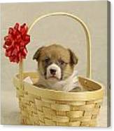 Puppy In A Basket Canvas Print