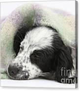 Puppy Sleeping Under Scarf Canvas Print