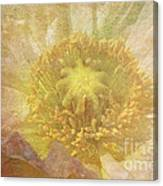 Pure Delicate Center Canvas Print
