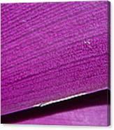 Pure Purple Canvas Print
