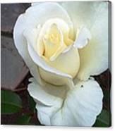 Pure White Rose Canvas Print