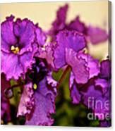 Purple And More Purple Canvas Print