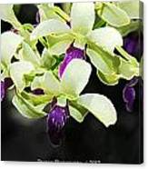Purple And White Orchid Accent Fx  Canvas Print