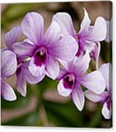 Purple And White Orchids Canvas Print