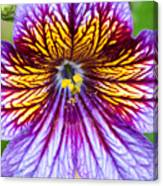 Purple And Yellow Flower Canvas Print