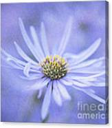 Purple Aster Flower Canvas Print