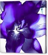 Purple Blast Canvas Print