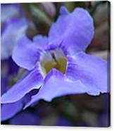 Purple Bokeh Canvas Print