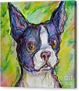 Purple Boston Terrier Canvas Print