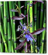 Blue Bursts From Bamboo Canvas Print