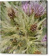 Purple Cacti With Pollinated Beetle Canvas Print