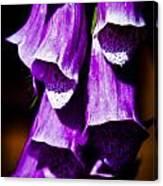 Purple Cascade Canvas Print