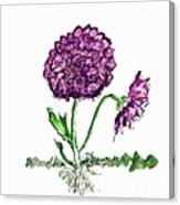Purple Chrysanthamums Canvas Print