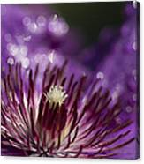 Purple Clematis And Bokeh Canvas Print