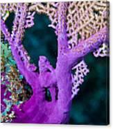 Purple Coral Canvas Print