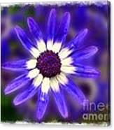 Purple Daisy Photoart Canvas Print