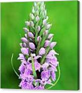 Purple Early Morning Orchid Canvas Print