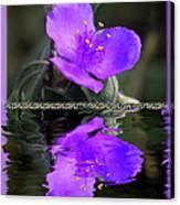 Purple Elegance - Spider Wort Canvas Print