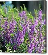 Purple English Garden  Canvas Print