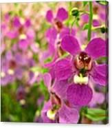 Purple Field Canvas Print