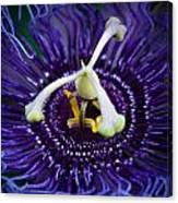 Purple Flower 3 Canvas Print