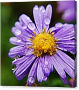 Purple Flower Morning Dew Canvas Print