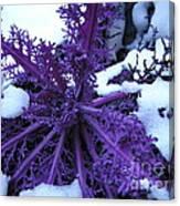 Purple Foliage In Winter Canvas Print