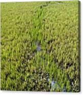 Purple Glasswort (salicornia Ramosissima) Canvas Print