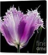 Purple Glow Canvas Print