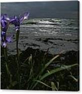 Purple Irises On Beach Canvas Print