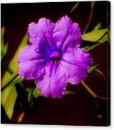 Purple Is The Color Canvas Print