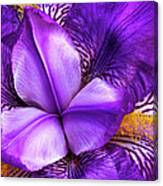 Purple Japanese Iris Canvas Print