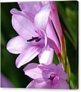 Purple Lilies Canvas Print