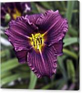 Purple Lilly Canvas Print