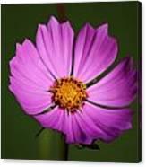 Purple Nurple Canvas Print