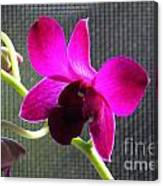 Purple Orchid Aglow Canvas Print
