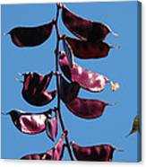 Purple Pods Canvas Print