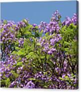 Purple Prelude Canvas Print