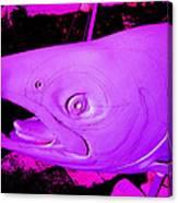 Purple Salmon Canvas Print