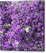 Purple Screen Square Canvas Print