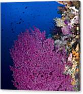 Purple Sea Fan In Raja Ampat, Indonesia Canvas Print