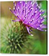 Purple Spikes Canvas Print
