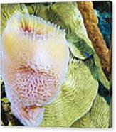 Purple Vase Sponge Canvas Print