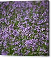 Purple Wildflowers Square Canvas Print