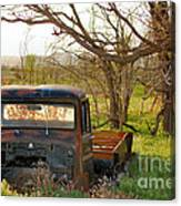 Put Out To Pasture2 Canvas Print
