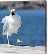Putting His Foot Down Herring Gull Canvas Print