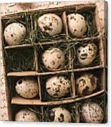 Quail Eggs In Box Canvas Print